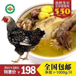 安徽广德 有机老母鸡  新鲜先杀土鸡 散养鸡 笨鸡 鸡龄一年半 净膛≥1kg/只