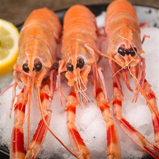 【净虾5斤】鳌虾海鲜活体海龙虾铁甲虾水产鲜活冷冻刺身包邮