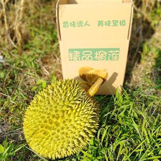【现摘-四个工作日内发货】猫山榴莲3-4斤装越南品种 热带水果