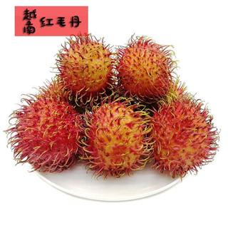 【现摘-四个工作日内发货】越南红毛丹4斤 热带新鲜水果进口毛荔枝东南亚红皮果
